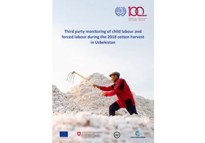 О докладе МОТ по использованию детского и принудительного труда в Узбекистане