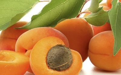 Узбекистан вошёл в тройку мировых лидеров по экспорту свежего абрикоса