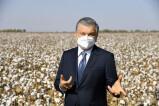 Президент: Кластер и материальный стимул – будущее сельского хозяйства Узбекистана